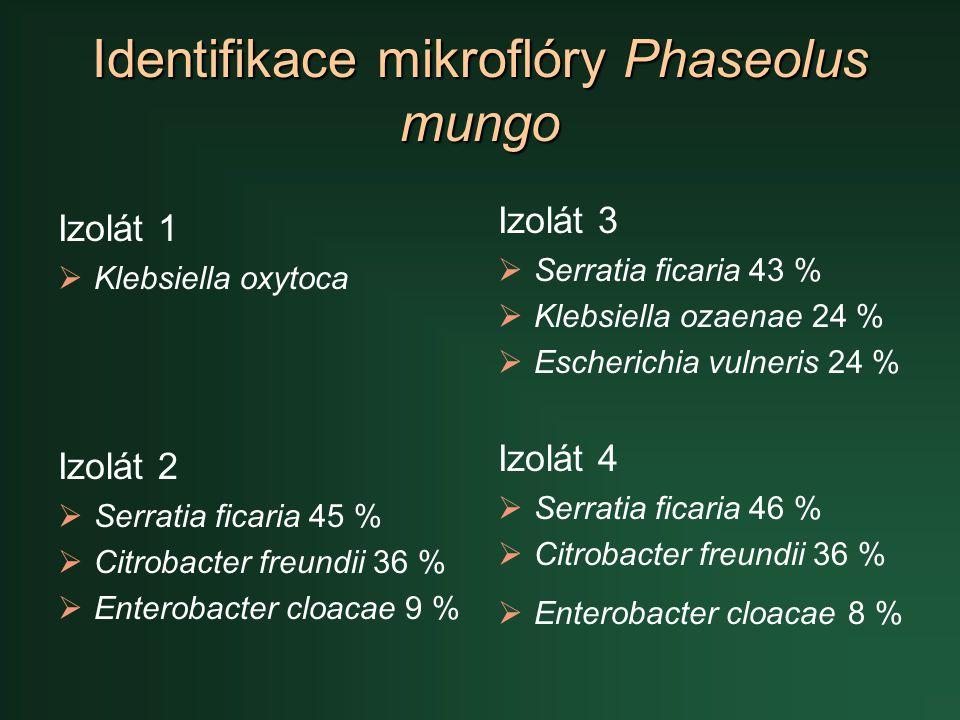 Identifikace mikroflóry Phaseolus mungo Izolát 1  Klebsiella oxytoca Izolát 2  Serratia ficaria 45 %  Citrobacter freundii 36 %  Enterobacter cloa