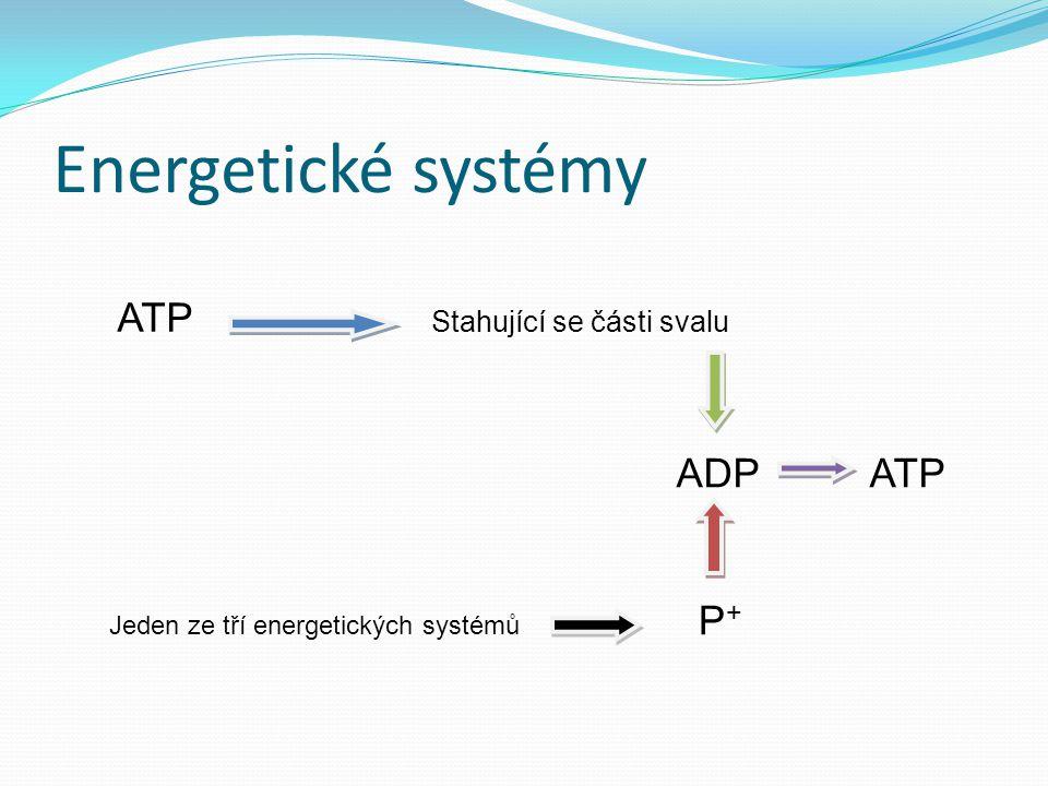 Energetické systémy ATP Stahující se části svalu ADP ATP Jeden ze tří energetických systémů P +