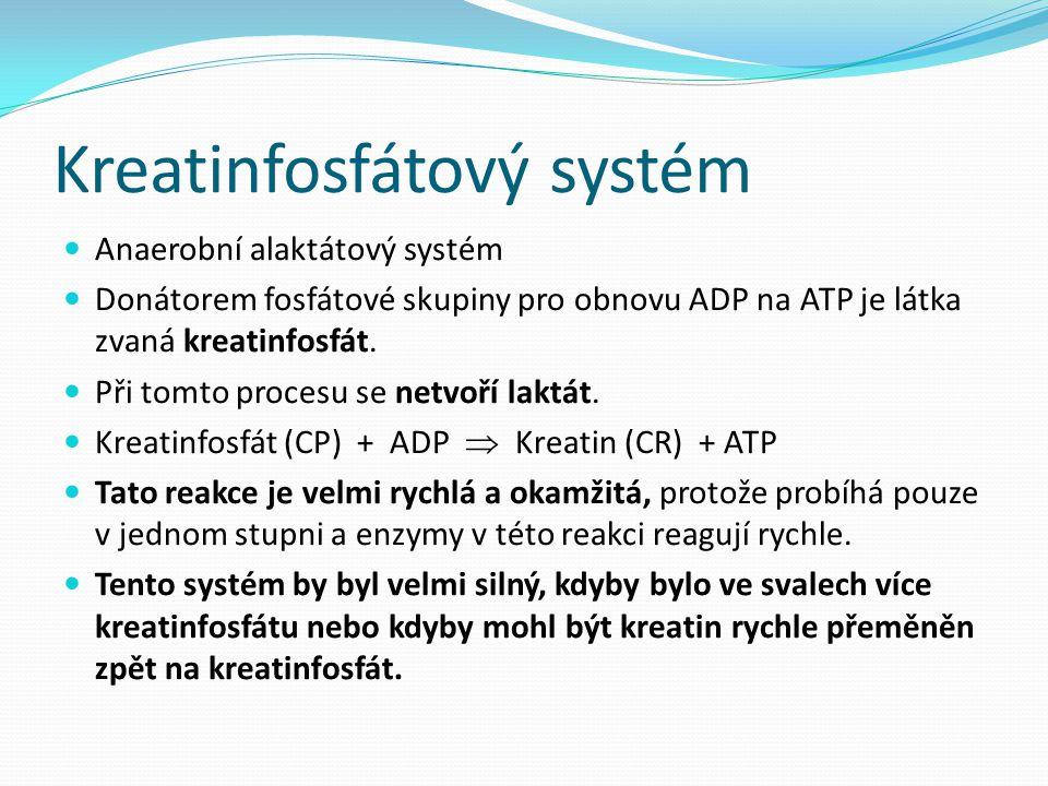 Kreatinfosfátový systém Anaerobní alaktátový systém Donátorem fosfátové skupiny pro obnovu ADP na ATP je látka zvaná kreatinfosfát. Při tomto procesu
