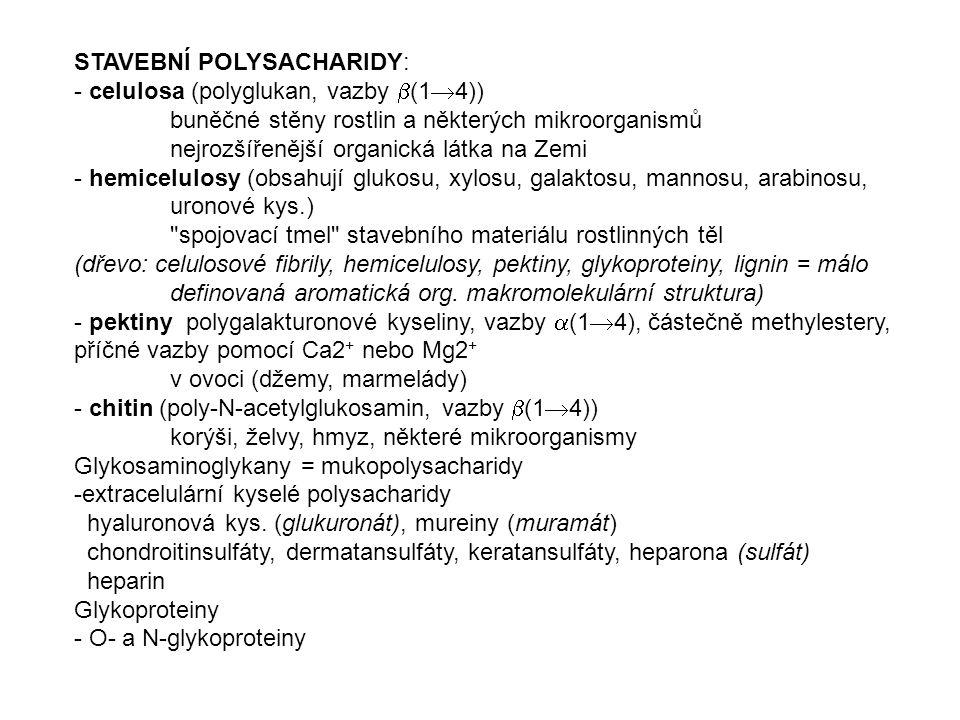 STAVEBNÍ POLYSACHARIDY: - celulosa (polyglukan, vazby  (1  4)) buněčné stěny rostlin a některých mikroorganismů nejrozšířenější organická látka na Z