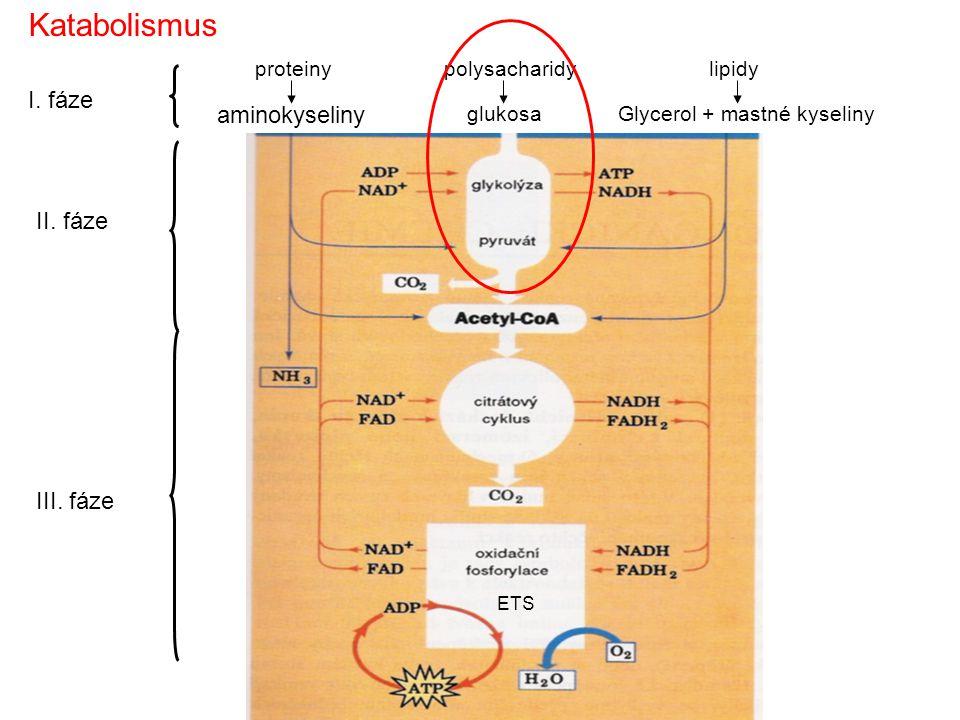 proteiny aminokyseliny polysacharidy glukosa lipidy Glycerol + mastné kyseliny I. fáze II. fáze III. fáze Katabolismus ETS