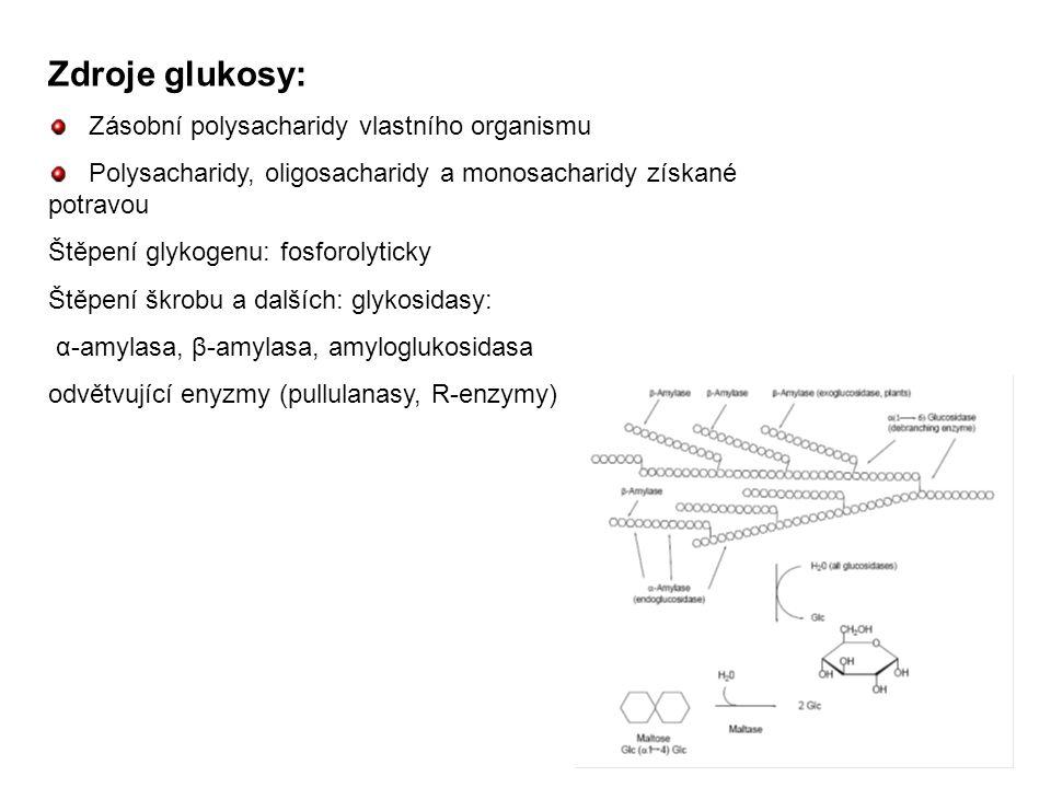 Zdroje glukosy: Zásobní polysacharidy vlastního organismu Polysacharidy, oligosacharidy a monosacharidy získané potravou Štěpení glykogenu: fosforolyt