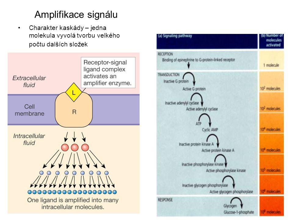 Charakter kaskády – jedna molekula vyvolá tvorbu velkého počtu dalších složek