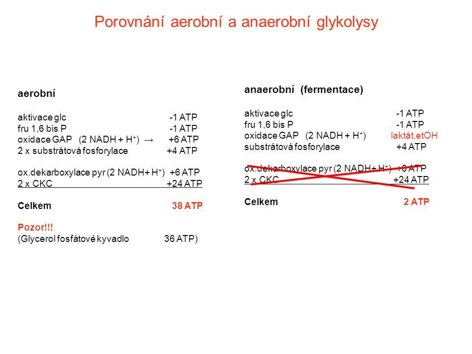 Porovnání aerobní a anaerobní glykolysy aerobní aktivace glc -1 ATP fru 1,6 bis P -1 ATP oxidace GAP (2 NADH + H + ) → +6 ATP 2 x substrátová fosforyl