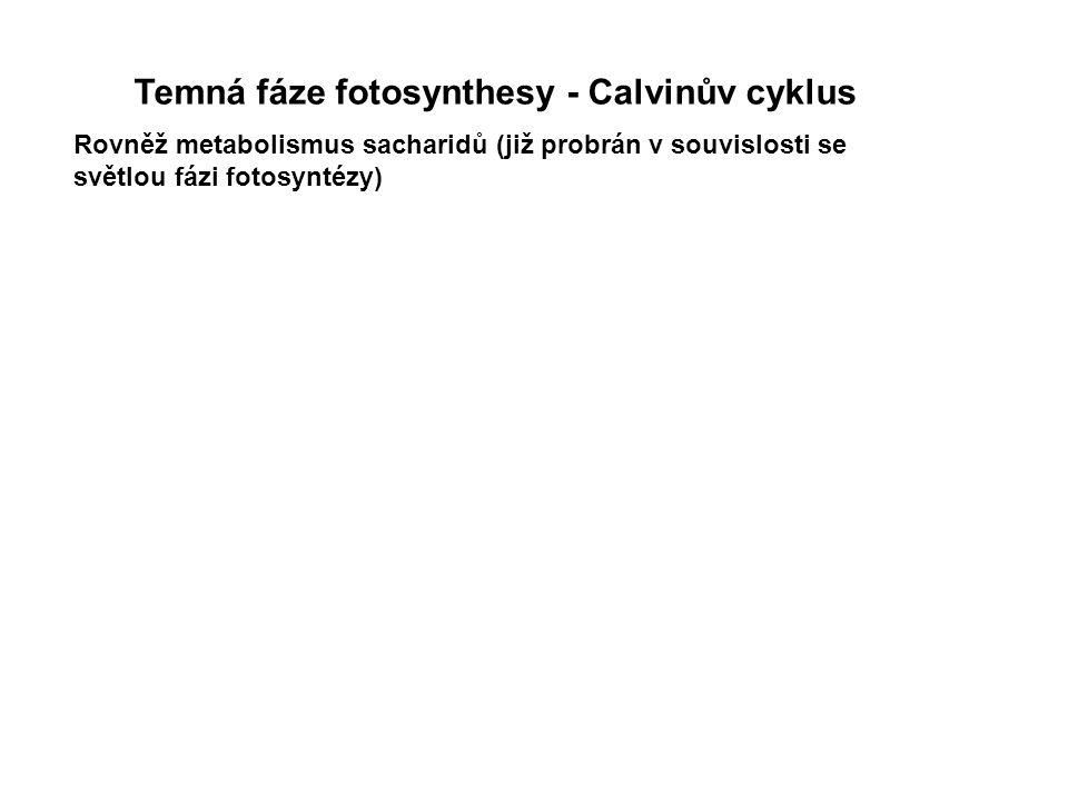 Temná fáze fotosynthesy - Calvinův cyklus Rovněž metabolismus sacharidů (již probrán v souvislosti se světlou fázi fotosyntézy)