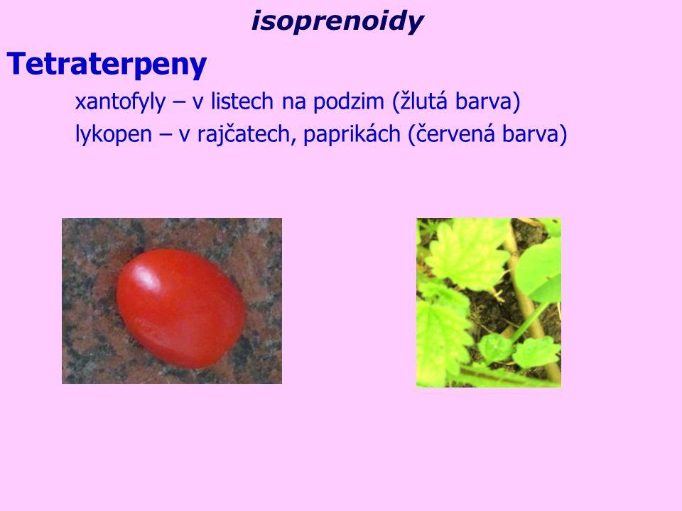 Tetraterpeny xantofyly – v listech na podzim (žlutá barva) lykopen – v rajčatech, paprikách (červená barva) isoprenoidy