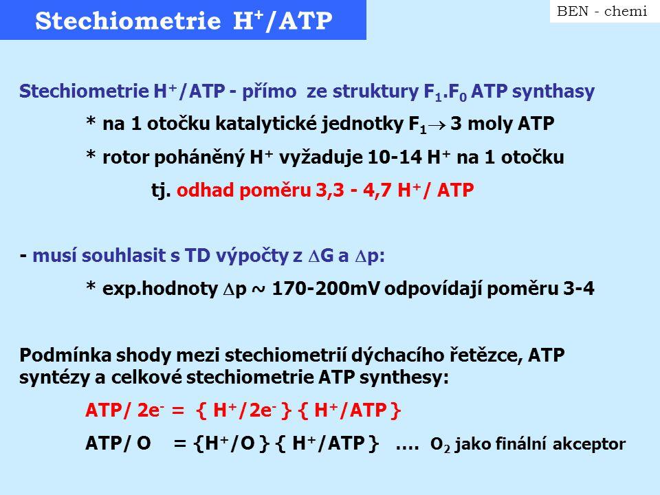 Stechiometrie H + /ATP BEN - chemi Stechiometrie H + /ATP - přímo ze struktury F 1.F 0 ATP synthasy * na 1 otočku katalytické jednotky F 1  3 moly AT