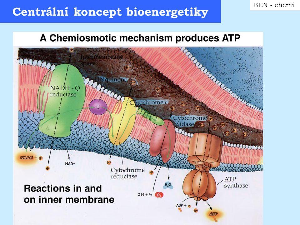 Centrální koncept bioenergetiky BEN - chemi