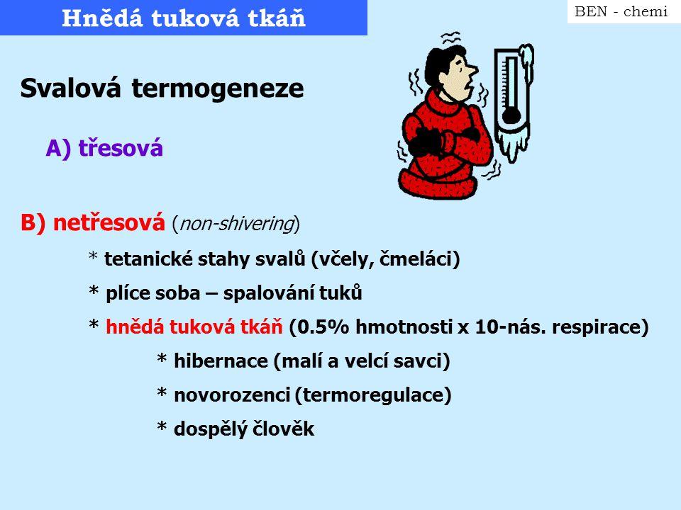 Hnědá tuková tkáň BEN - chemi Svalová termogeneze A) třesová B) netřesová (non-shivering) * tetanické stahy svalů (včely, čmeláci) * plíce soba – spal