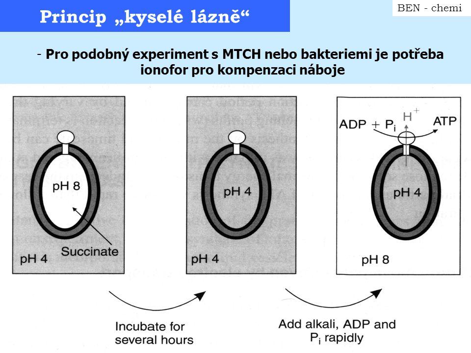 """Princip """"kyselé lázně"""" BEN - chemi - Pro podobný experiment s MTCH nebo bakteriemi je potřeba ionofor pro kompenzaci náboje"""