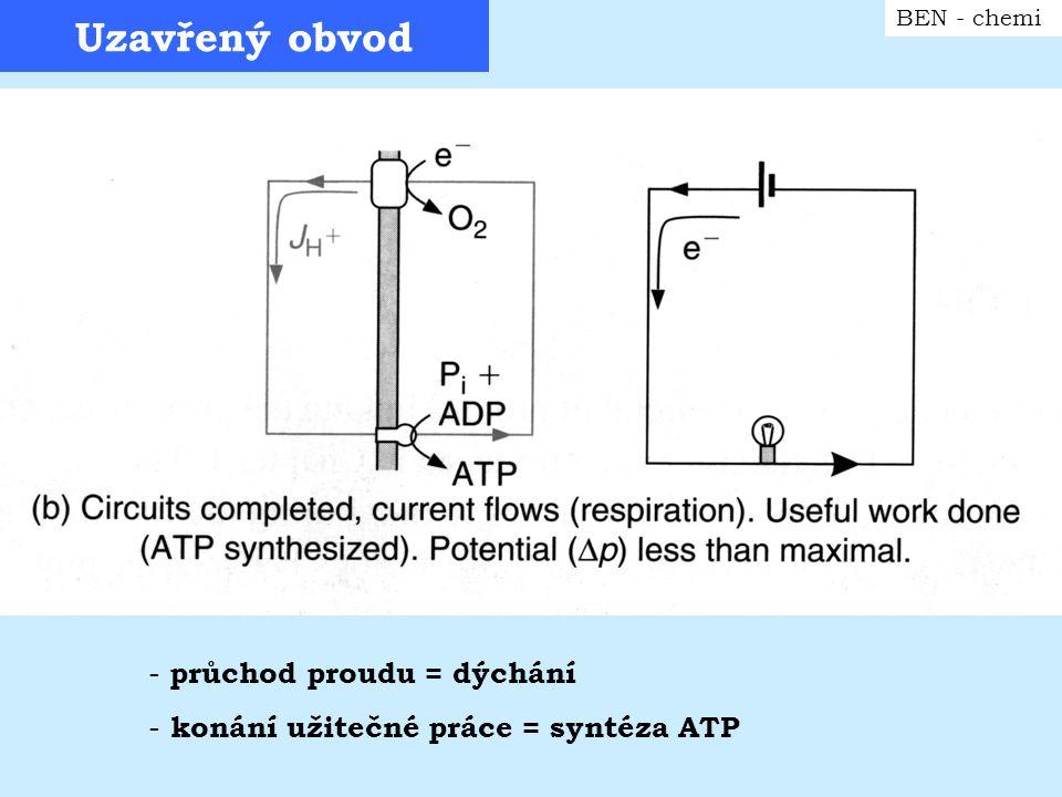 Uzavřený obvod BEN - chemi - průchod proudu = dýchání - konání užitečné práce = syntéza ATP
