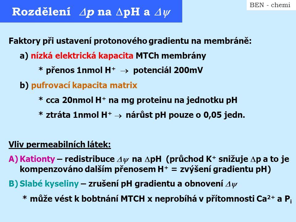 Rozdělení  p na  pH a  BEN - chemi Faktory při ustavení protonového gradientu na membráně: a) nízká elektrická kapacita MTCh membrány * přenos 1nm