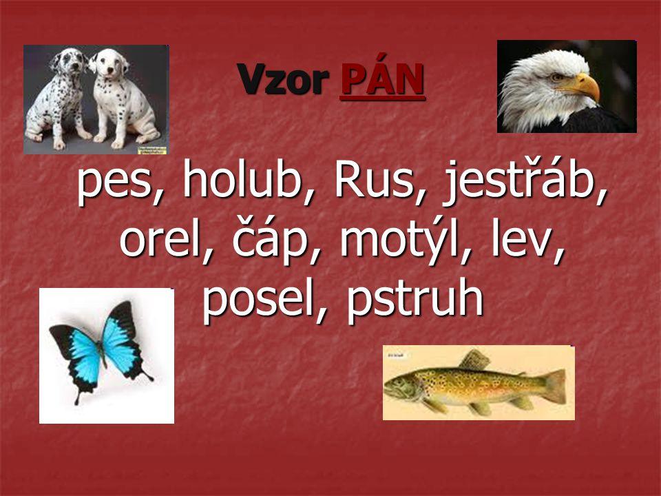 Vzor PÁN pes, holub, Rus, jestřáb, orel, čáp, motýl, lev, posel, pstruh