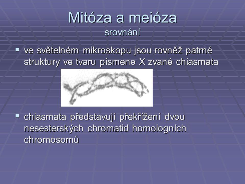 Mitóza a meióza srovnání  ve světelném mikroskopu jsou rovněž patrné struktury ve tvaru písmene X zvané chiasmata  chiasmata představují překřížení