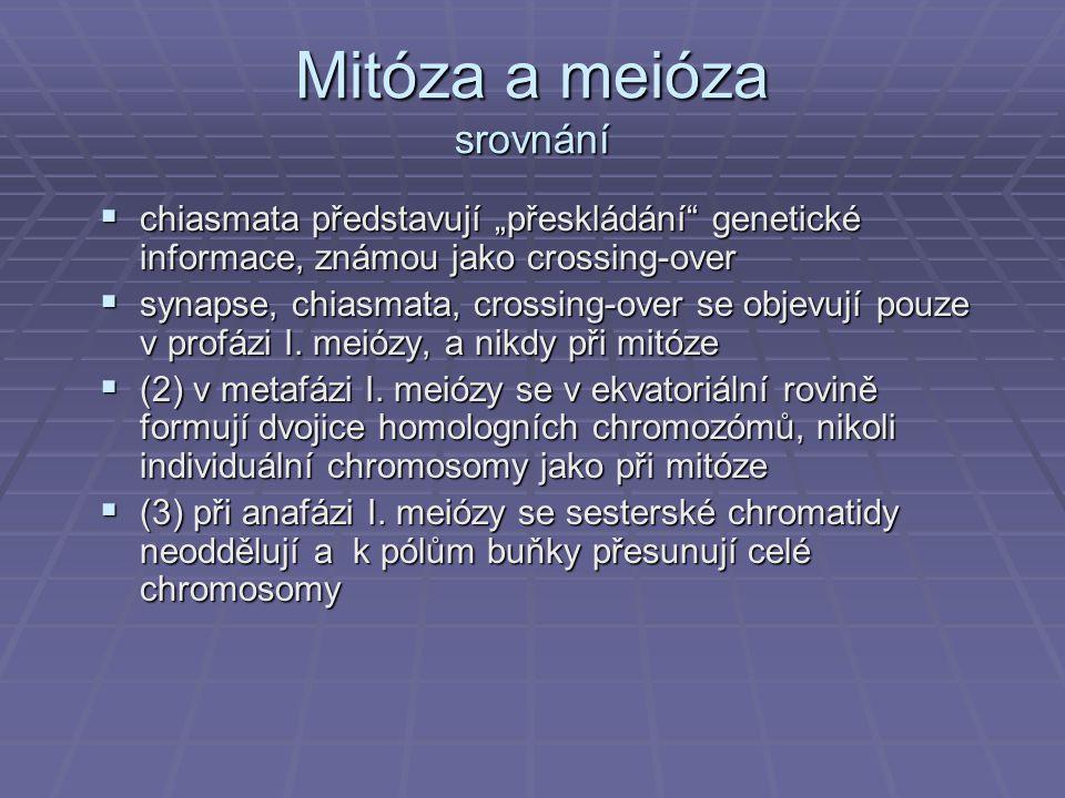 """Mitóza a meióza srovnání  chiasmata představují """"přeskládání"""" genetické informace, známou jako crossing-over  synapse, chiasmata, crossing-over se o"""