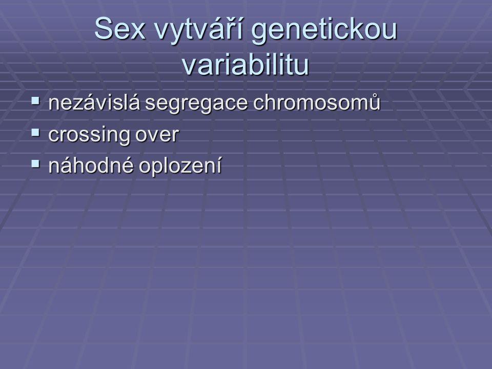 Sex vytváří genetickou variabilitu  nezávislá segregace chromosomů  crossing over  náhodné oplození