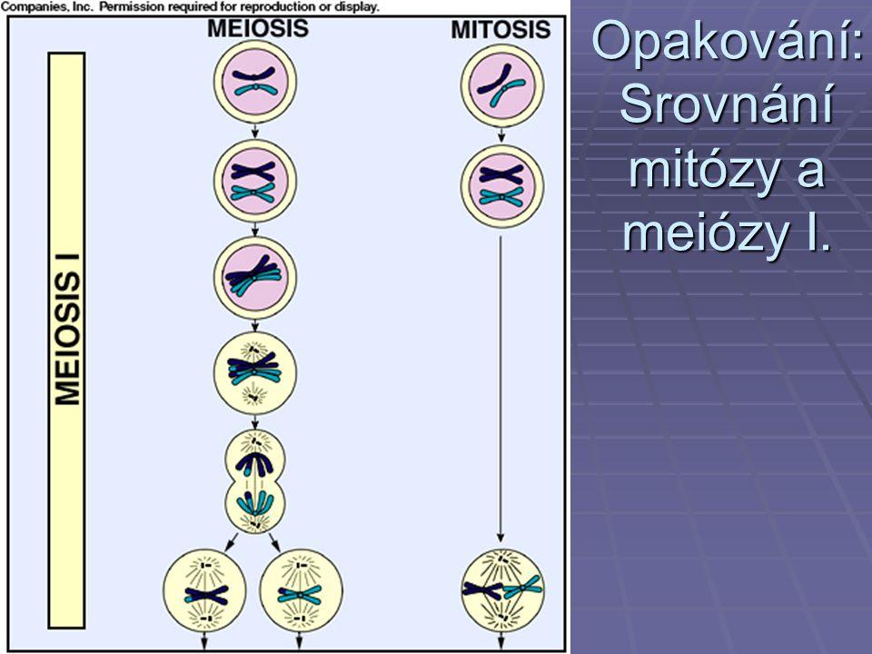 Opakování: Srovnání mitózy a meiózy I.