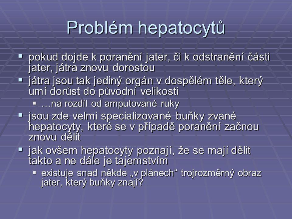 Problém hepatocytů  pokud dojde k poranění jater, či k odstranění části jater, játra znovu dorostou  játra jsou tak jediný orgán v dospělém těle, kt