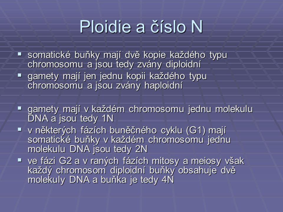 Ploidie a číslo N  somatické buňky mají dvě kopie každého typu chromosomu a jsou tedy zvány diploidní  gamety mají jen jednu kopii každého typu chro