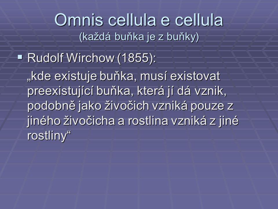 """Omnis cellula e cellula (každá buňka je z buňky)  Rudolf Wirchow (1855): """"kde existuje buňka, musí existovat preexistující buňka, která jí dá vznik,"""