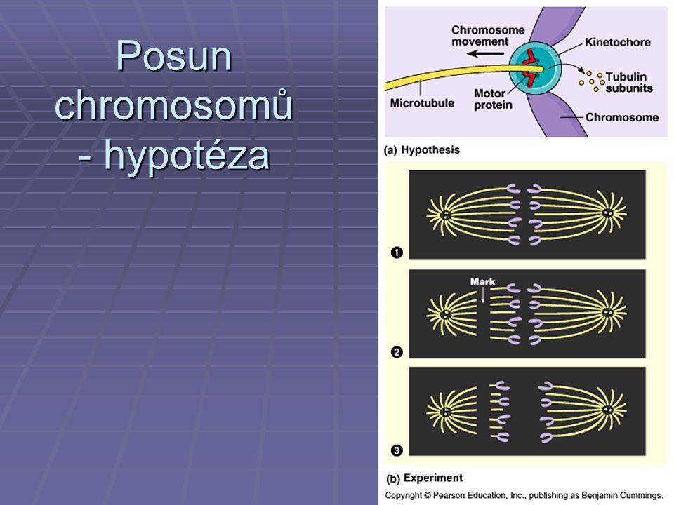 Posun chromosomů - hypotéza