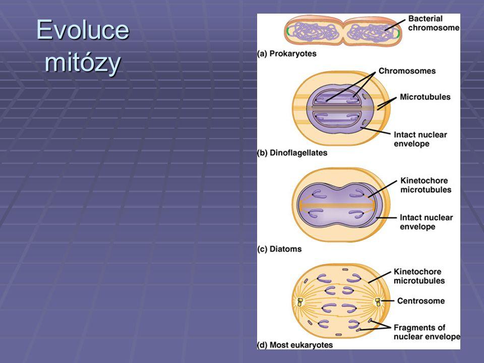 Evoluce mitózy