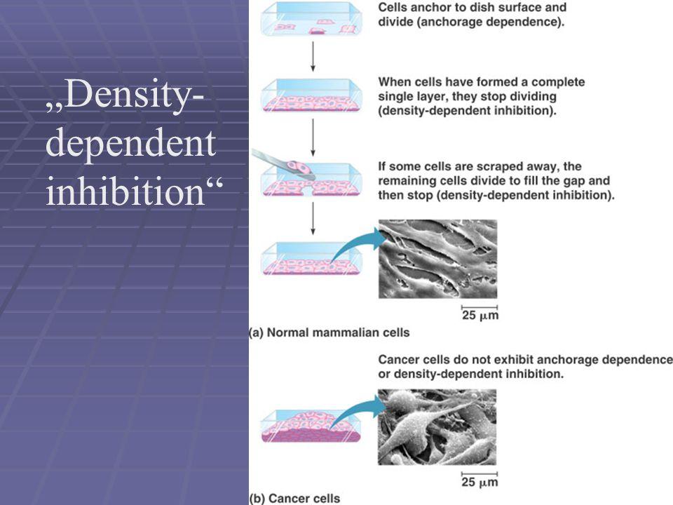 """""""Density- dependent inhibition"""""""