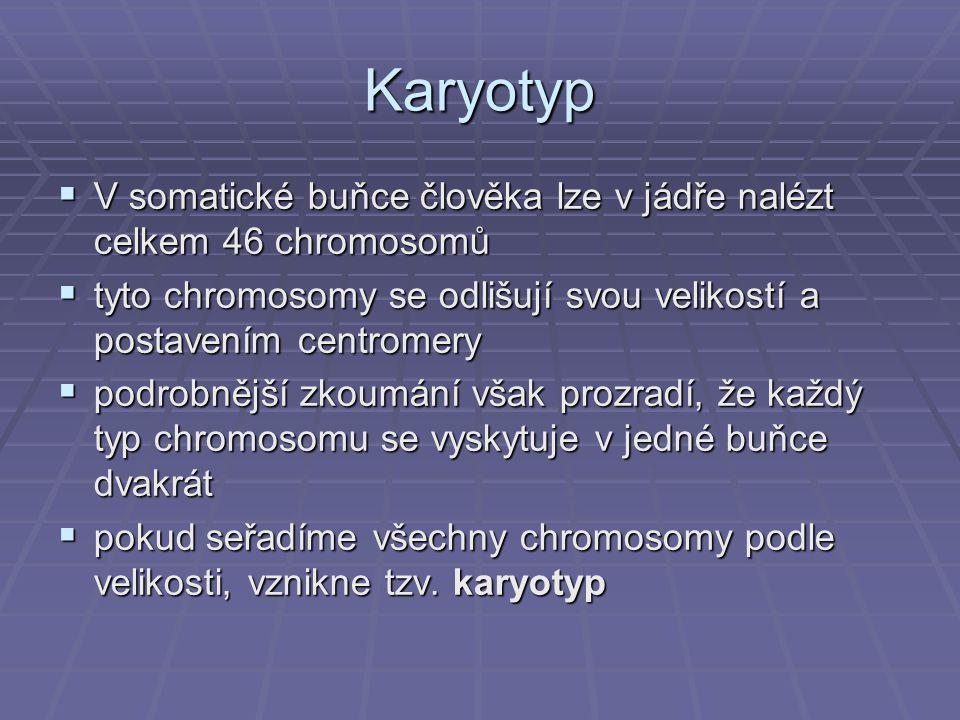 Karyotyp  V somatické buňce člověka lze v jádře nalézt celkem 46 chromosomů  tyto chromosomy se odlišují svou velikostí a postavením centromery  po