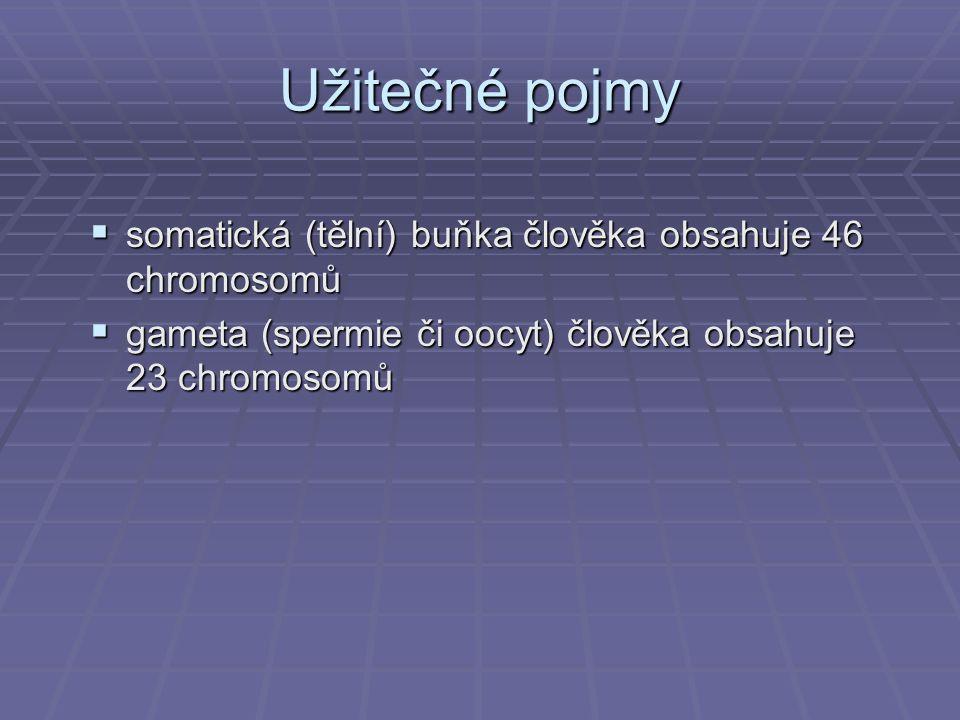 Užitečné pojmy  somatická (tělní) buňka člověka obsahuje 46 chromosomů  gameta (spermie či oocyt) člověka obsahuje 23 chromosomů