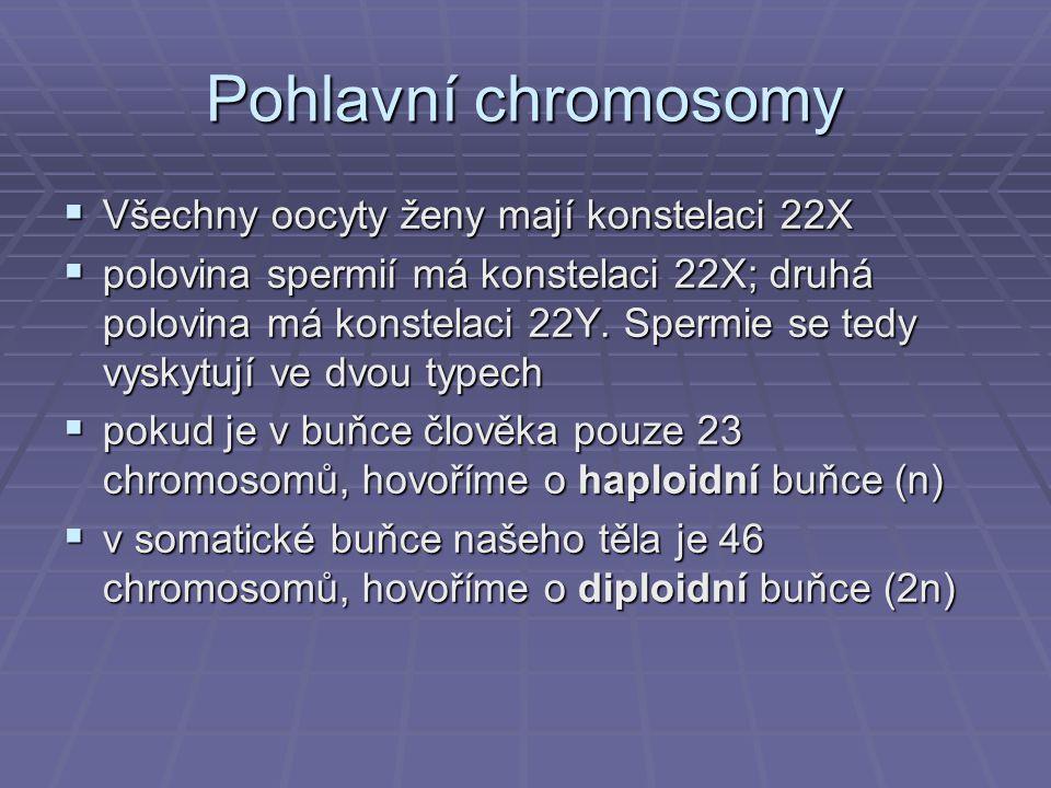 Pohlavní chromosomy  Všechny oocyty ženy mají konstelaci 22X  polovina spermií má konstelaci 22X; druhá polovina má konstelaci 22Y. Spermie se tedy