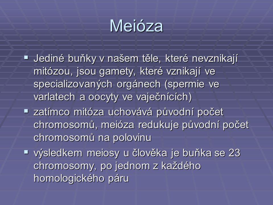 Meióza  Jediné buňky v našem těle, které nevznikají mitózou, jsou gamety, které vznikají ve specializovaných orgánech (spermie ve varlatech a oocyty