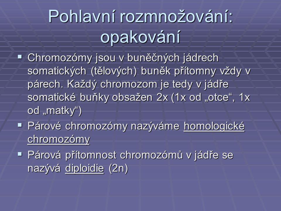 Pohlavní rozmnožování: opakování  Chromozómy jsou v buněčných jádrech somatických (tělových) buněk přítomny vždy v párech. Každý chromozom je tedy v