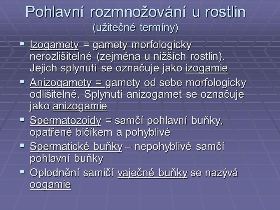 Pohlavní rozmnožování u rostlin (užitečné termíny)  Izogamety = gamety morfologicky nerozlišitelné (zejména u nižších rostlin). Jejich splynutí se oz