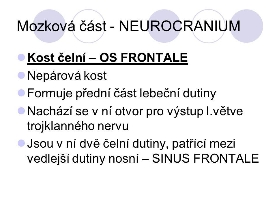 Mozková část - NEUROCRANIUM Kost čelní – OS FRONTALE Nepárová kost Formuje přední část lebeční dutiny Nachází se v ní otvor pro výstup I.větve trojklanného nervu Jsou v ní dvě čelní dutiny, patřící mezi vedlejší dutiny nosní – SINUS FRONTALE