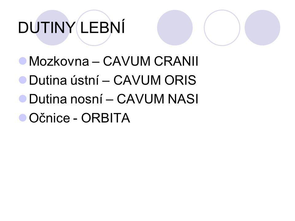 DUTINY LEBNÍ Mozkovna – CAVUM CRANII Dutina ústní – CAVUM ORIS Dutina nosní – CAVUM NASI Očnice - ORBITA