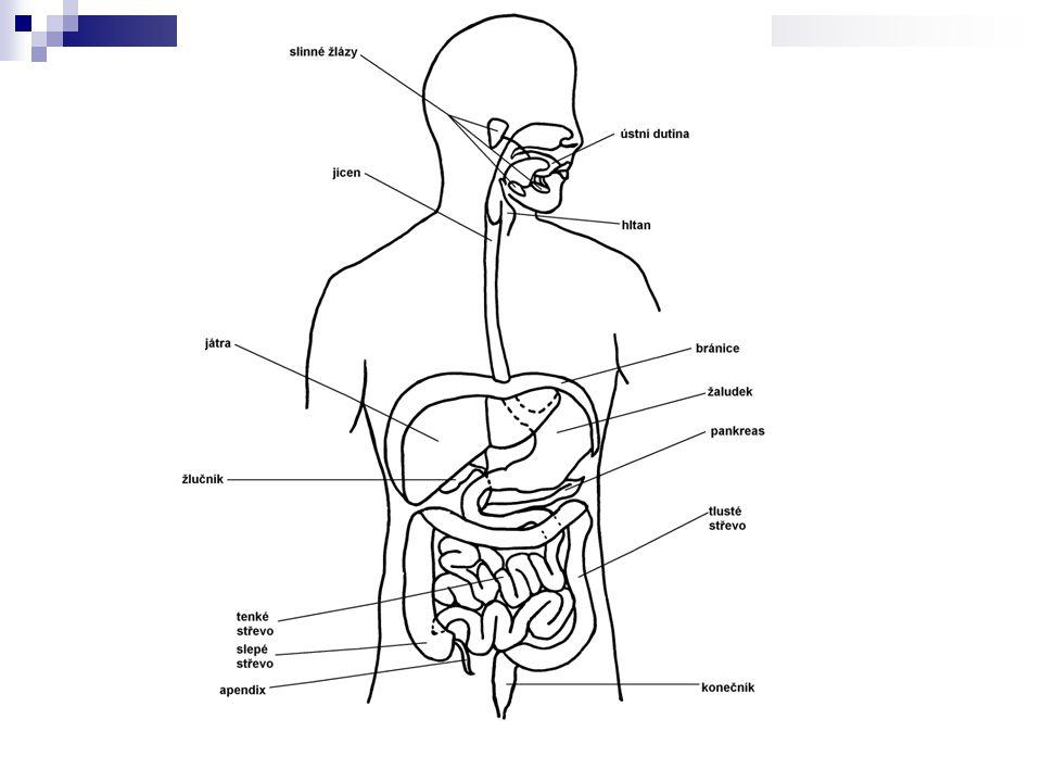 Ústní dutina ohraničena patrem, rty a tvářemi funkce: příjem potravy, promísení se slinami,mechanické a chemické zpracování zuby: řezáky, špičáky, třenové zuby, stoličky děti – mléčný chrup – 20 zubů dospělí – trvalý chrup – 32 zubů
