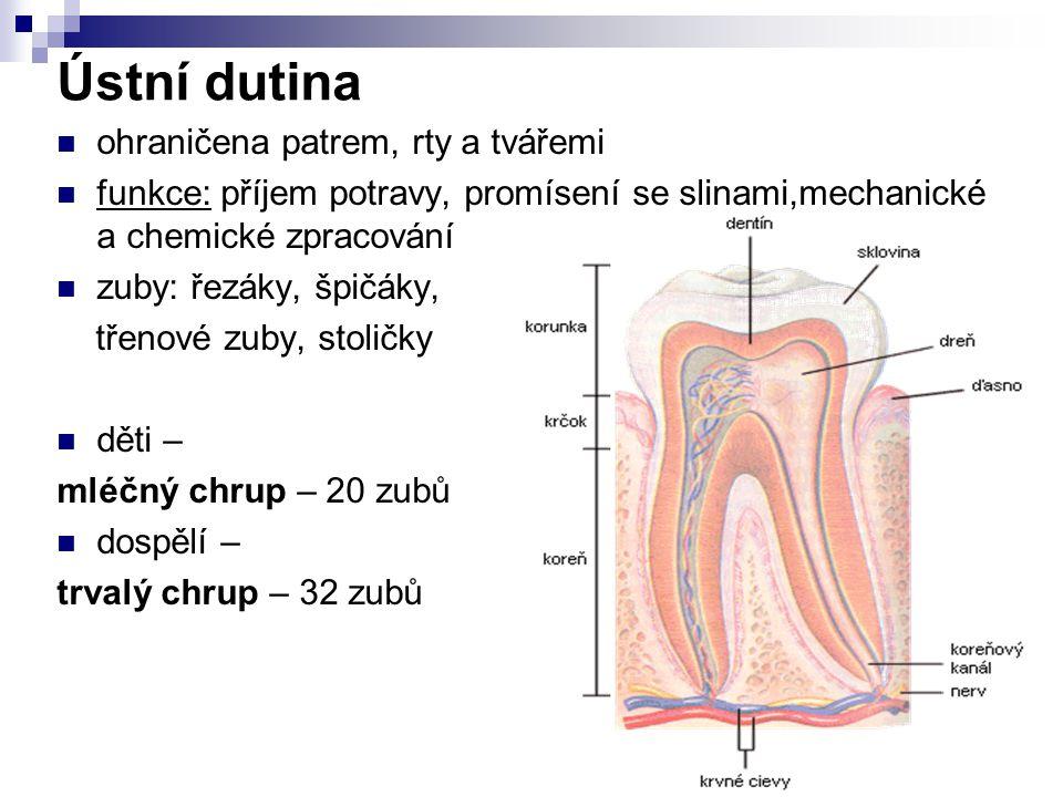 Ústní dutina ohraničena patrem, rty a tvářemi funkce: příjem potravy, promísení se slinami,mechanické a chemické zpracování zuby: řezáky, špičáky, tře