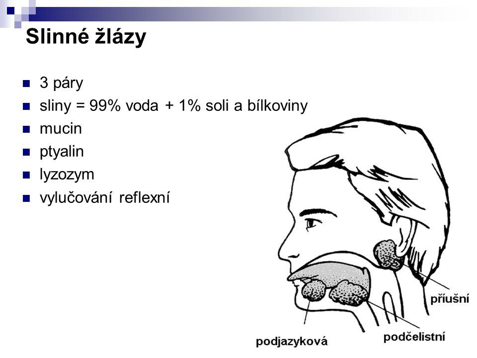 Hltan společná část dýchací a trávicí sou stavy 1.