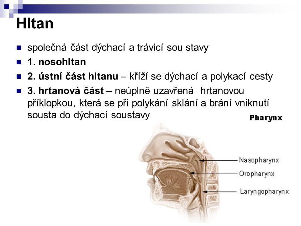 Hltan společná část dýchací a trávicí sou stavy 1. nosohltan 2. ústní část hltanu – kříží se dýchací a polykací cesty 3. hrtanová část – neúplně uzavř