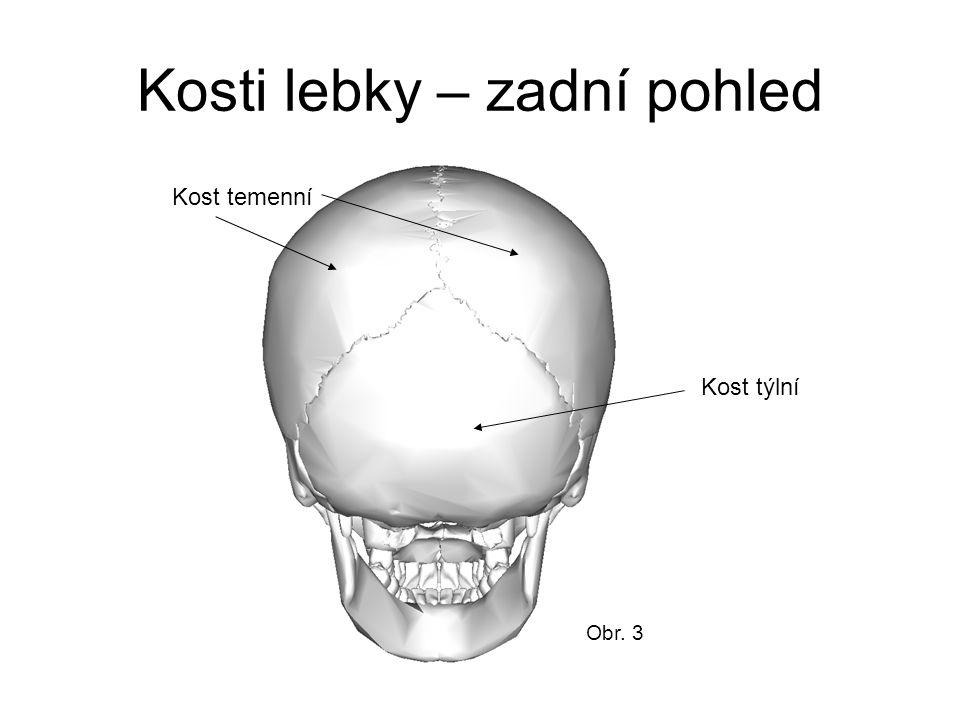 Kosti lebky – zadní pohled Kost týlní Kost temenní Obr. 3