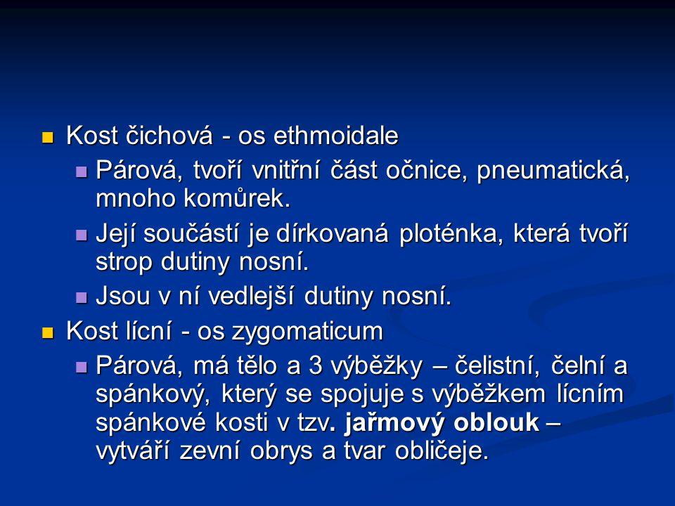 Kost čichová - os ethmoidale Kost čichová - os ethmoidale Párová, tvoří vnitřní část očnice, pneumatická, mnoho komůrek. Párová, tvoří vnitřní část oč