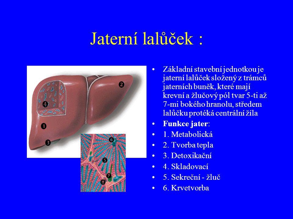 Játra - (hepar) Největší žláza trávicího ústrojí o hmotnost asi 1,5 kg, uložena pod pravou klenbou brániční Pravý lalok - lobus dester Levý lalok - lo