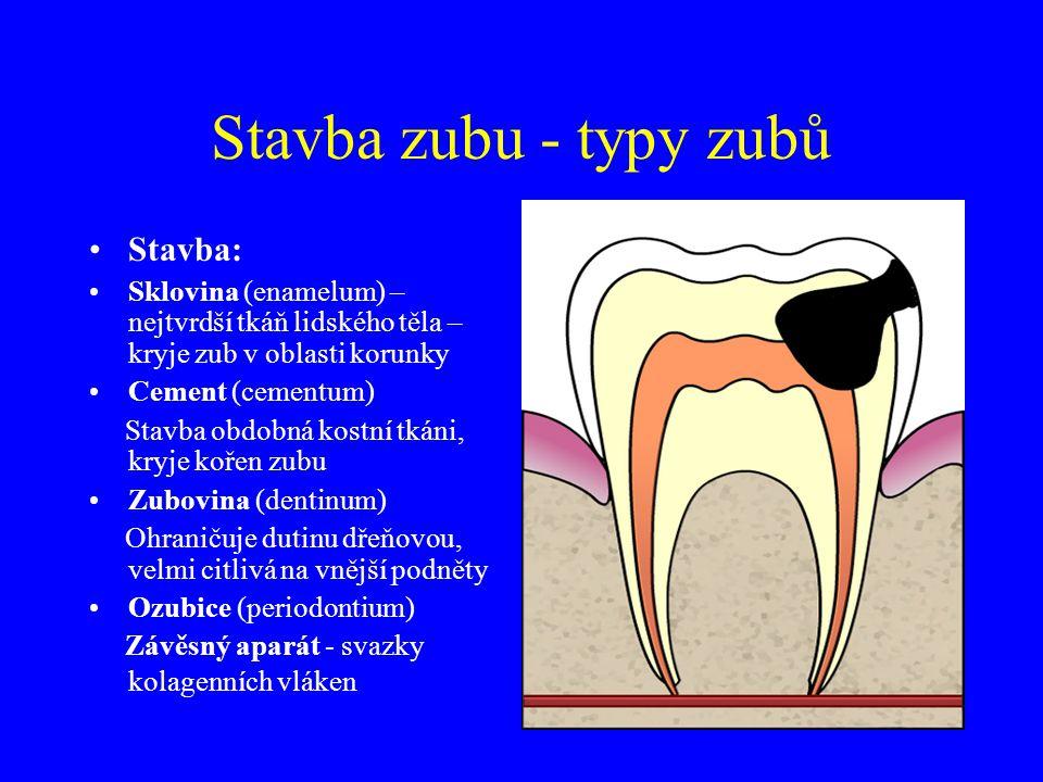 Stavba zubu - typy zubů Stavba: Sklovina (enamelum) – nejtvrdší tkáň lidského těla – kryje zub v oblasti korunky Cement (cementum) Stavba obdobná kostní tkáni, kryje kořen zubu Zubovina (dentinum) Ohraničuje dutinu dřeňovou, velmi citlivá na vnější podněty Ozubice (periodontium) Závěsný aparát - svazky kolagenních vláken