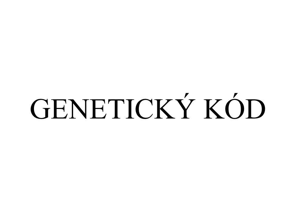 GENETICKÝ KÓD