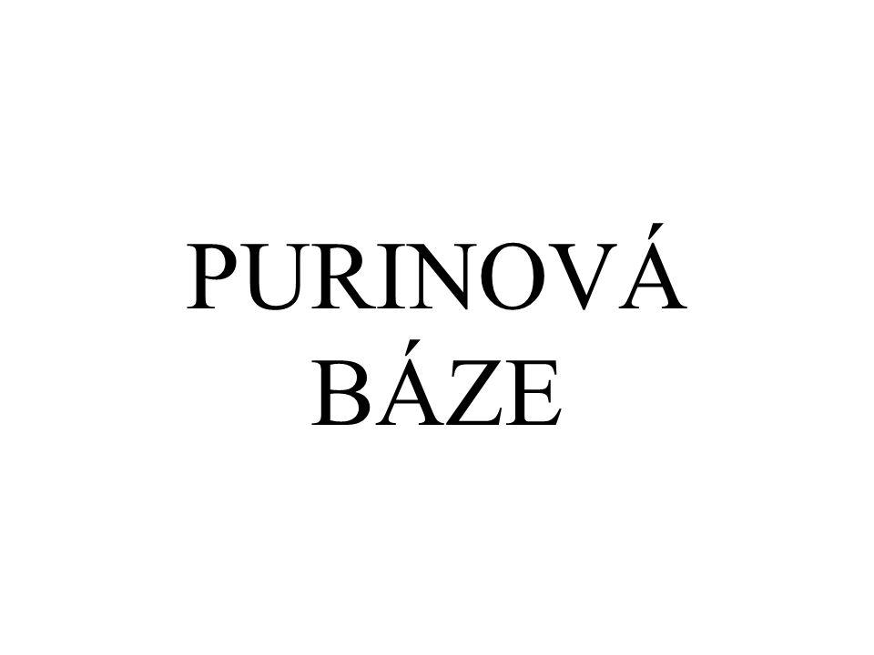 PURINOVÁ BÁZE