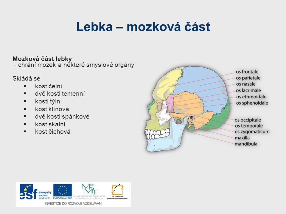 Lebka – mozková část Mozková část lebky - chrání mozek a některé smyslové orgány Skládá se  kost čelní  dvě kosti temenní  kosti týlní  kost klínová  dvě kosti spánkové  kost skalní  kost čichová