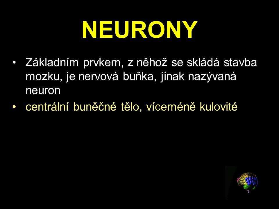NEURONY Základním prvkem, z něhož se skládá stavba mozku, je nervová buňka, jinak nazývaná neuron centrální buněčné tělo, víceméně kulovité