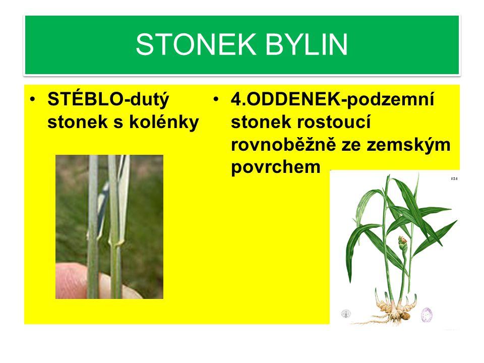 STONEK BYLIN LODYHA-část, ze které vyrůstají listy STVOL-stonek nesoucí květy