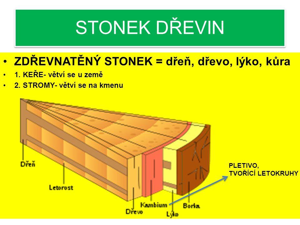 STONEK BYLIN STÉBLO-dutý stonek s kolénky 4.ODDENEK-podzemní stonek rostoucí rovnoběžně ze zemským povrchem