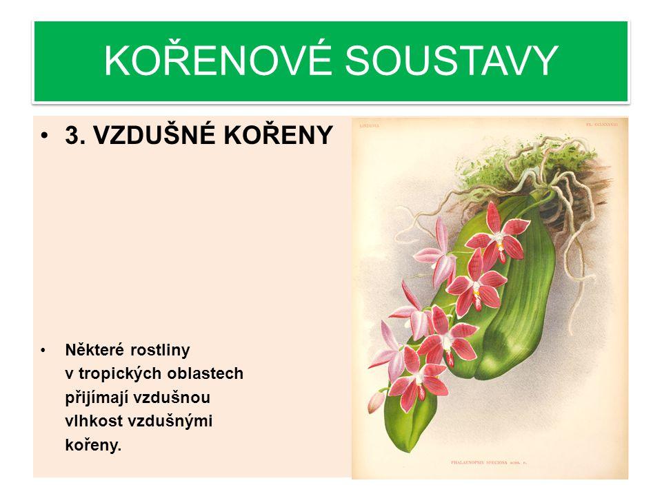 KOŘENOVÉ SOUSTAVY 3.